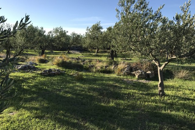Poljoprivredno zemljište Sutivan