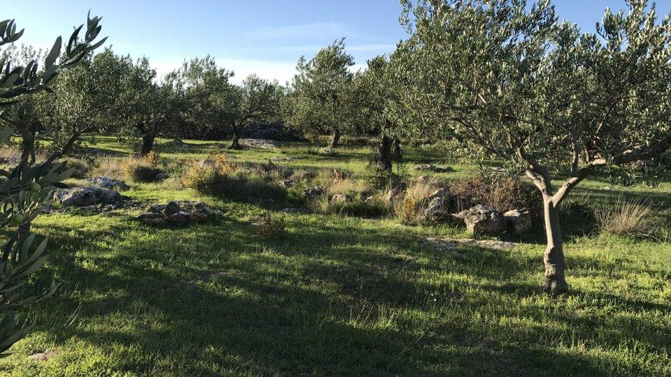 Landwirtschaftliche Fläche - in Sutivan