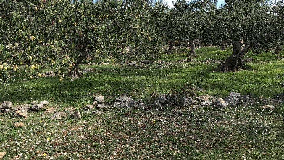 Terreno, 34496 m2, Vendita, Sutivan