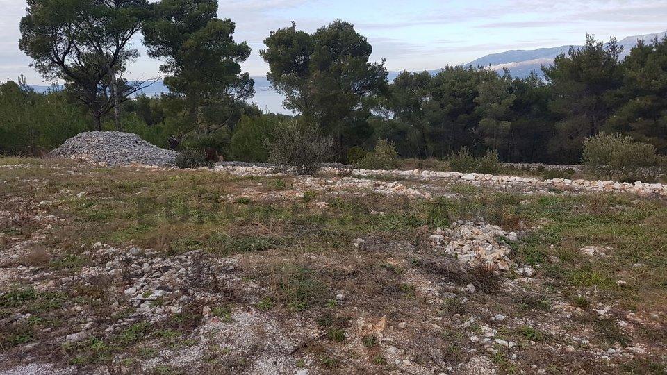 Landwirtschaftliche Fläche mit Haus - in Mirca