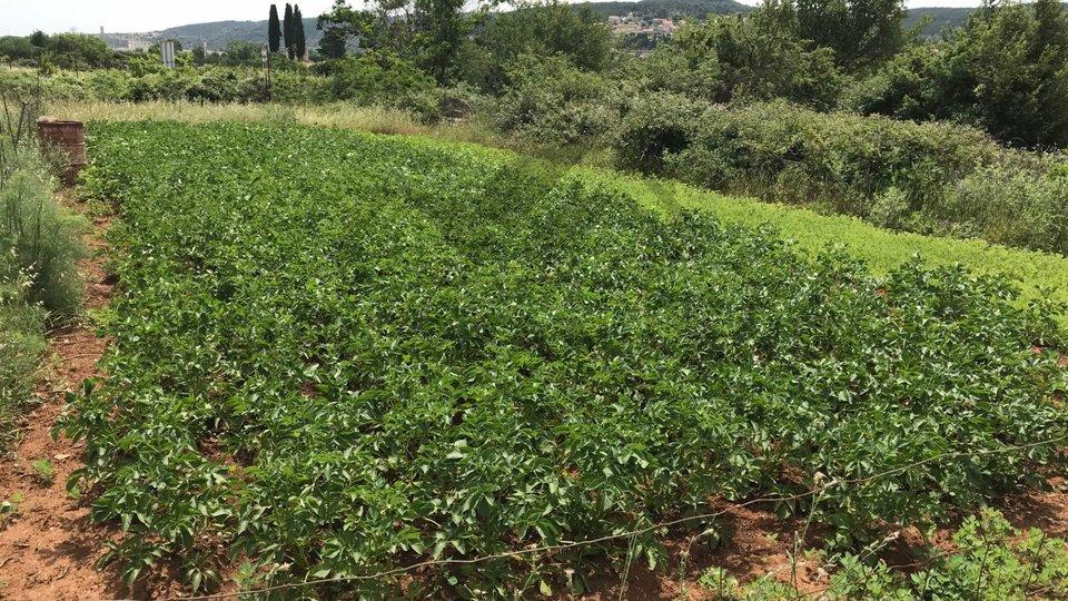 Poljoprivredno zemljište u Nerežišćima