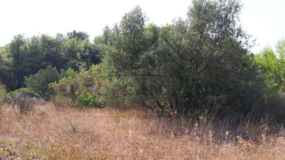Grundstück, 8303 m2, Verkauf, Mirca