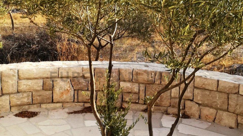 Olive grove Milna
