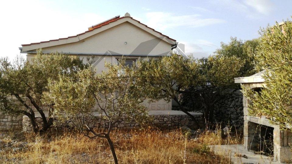 Maslinik s kućicom- Milna